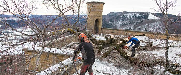 Bastei Linde Weicht Der Burg Sanierung Burg Hohenzollern